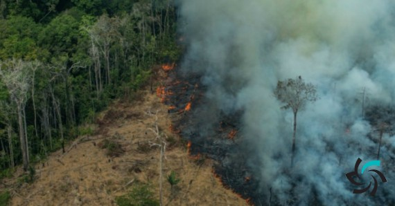 اپل به جنگل های آمازون کمک می کند | اخبار | شبکه شرکت آراپل
