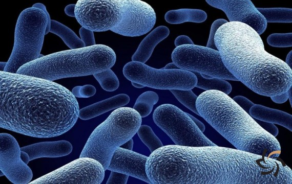 میکروبها اینترنت دارند !!! | اخبار | شبکه شرکت آراپل