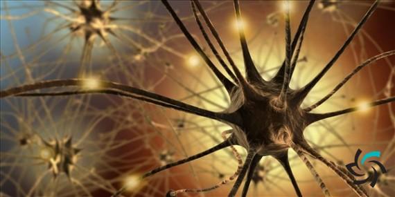 مینی کامپیوتر های تشکیل دهنده ی مغز ما | اخبار | شبکه شرکت آراپل