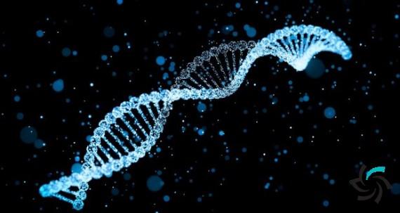 کمک علم IT در ساخت ژن باکتریایی | اخبار | شبکه شرکت آراپل
