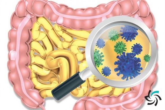 الگوریتمی برای پیشبینی سن فرد از روی میکروبیوم | اخبار | شبکه شرکت آراپل